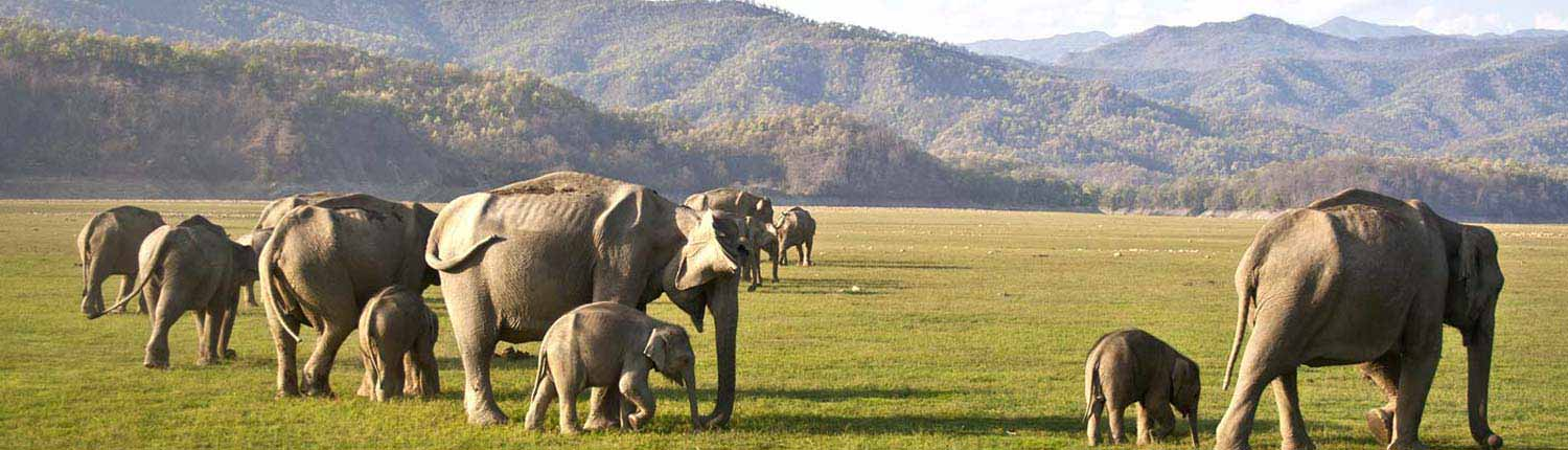 FAQs (Frequently Asked Questions) | Jim Corbett National Park Online Booking Website | India