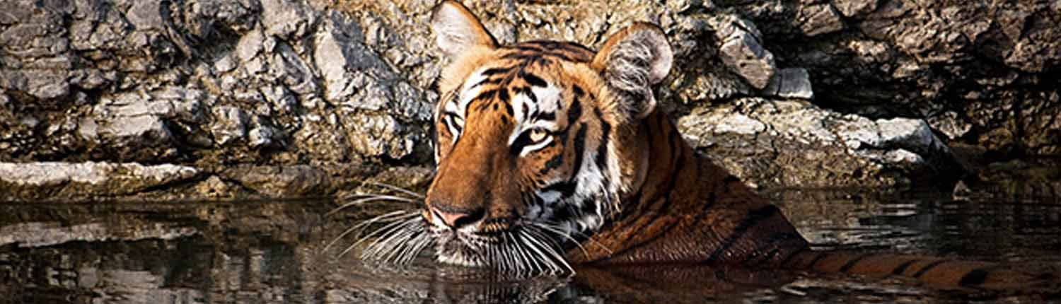 Corbett Vacation Tour Package | Jim Corbett National Park