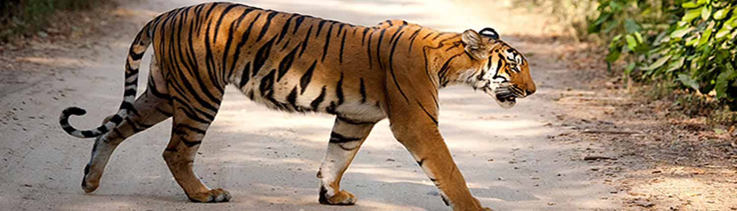 Dhikala Weekend Tour Package | Jim Corbett National Park
