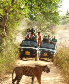Corbett Weekend Tour - Jim Corbett National Park