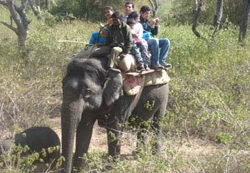 Elephant Safari - Jim Corbett National Park