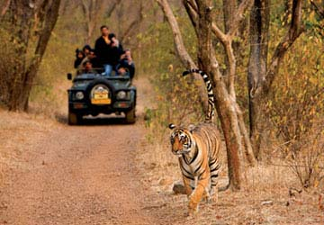 Jeep Safari - Jim Corbett National Park